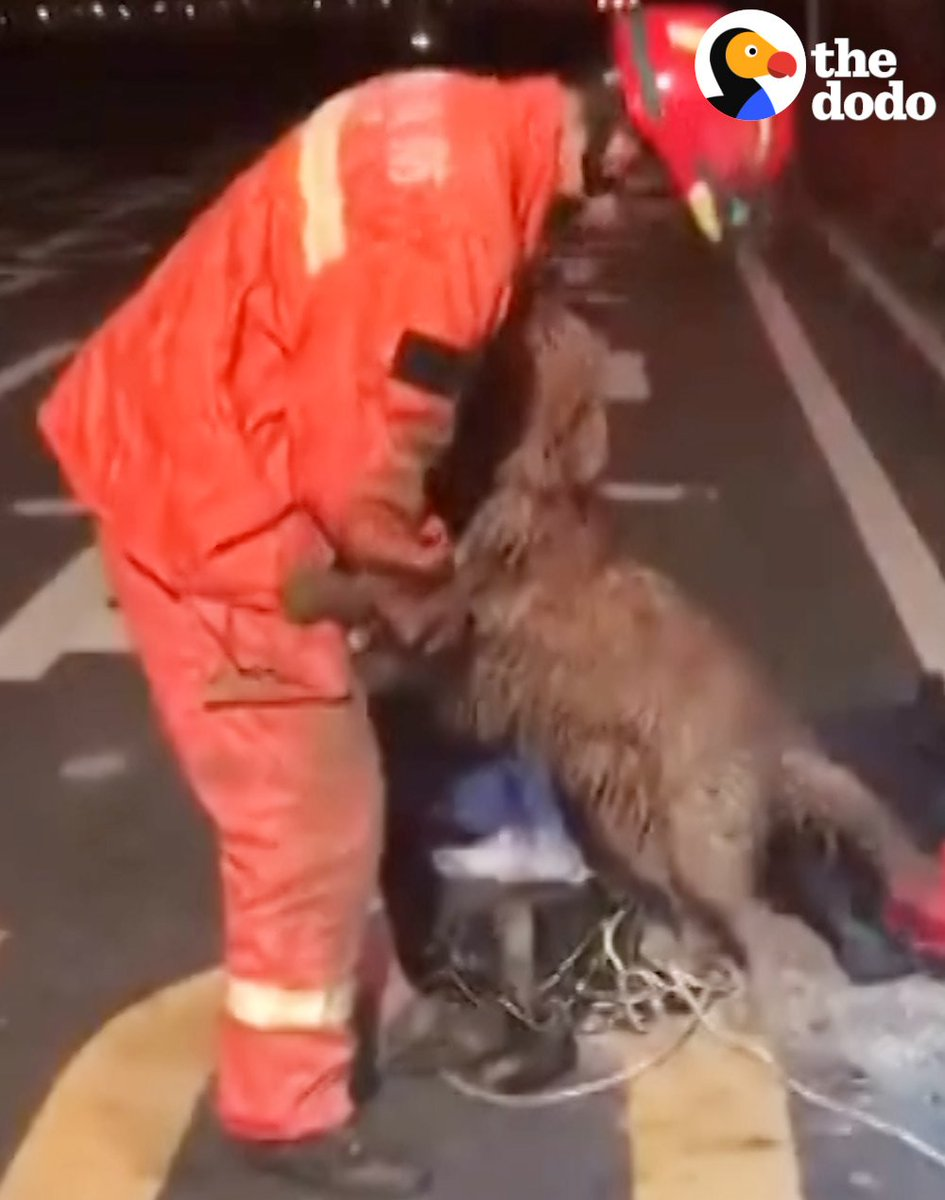 RT @dodo: This dog's reaction to being rescued is amazing ????❤️???? https://t.co/kW65upMgge