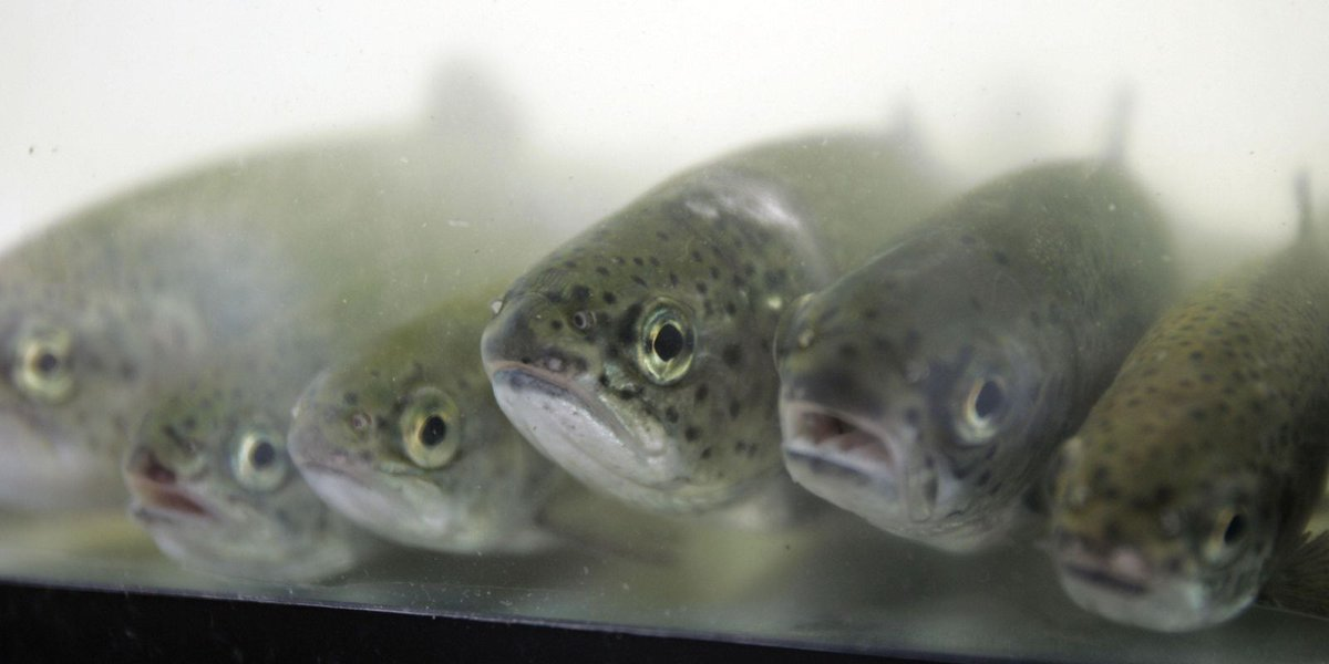 Michigan fish dealer sentenced in lake trout case
