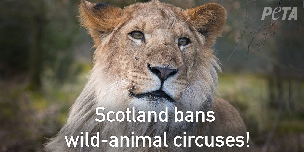 RT @peta: BREAKING: #Scotland just became the first country in the U.K. to ban wild-animal circuses! ???????????? https://t.co/fEUgxPKpaU