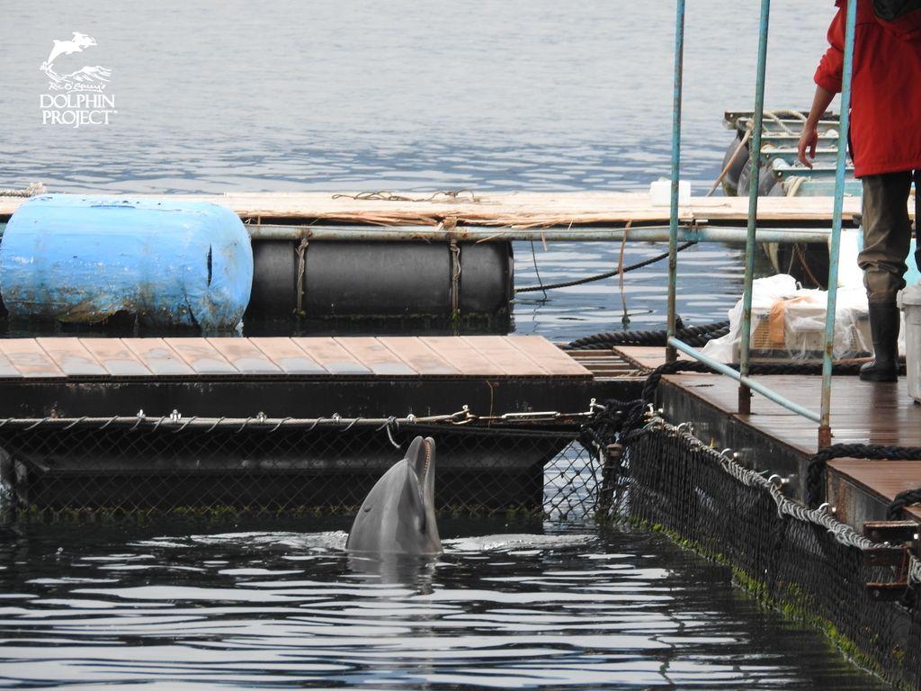 This isn't living. ���� Say NO to the �� show ➟ https://t.co/mL0CwnnV1B #ThanksButNoTanks #DolphinProject https://t.co/vaSbs6bQrf