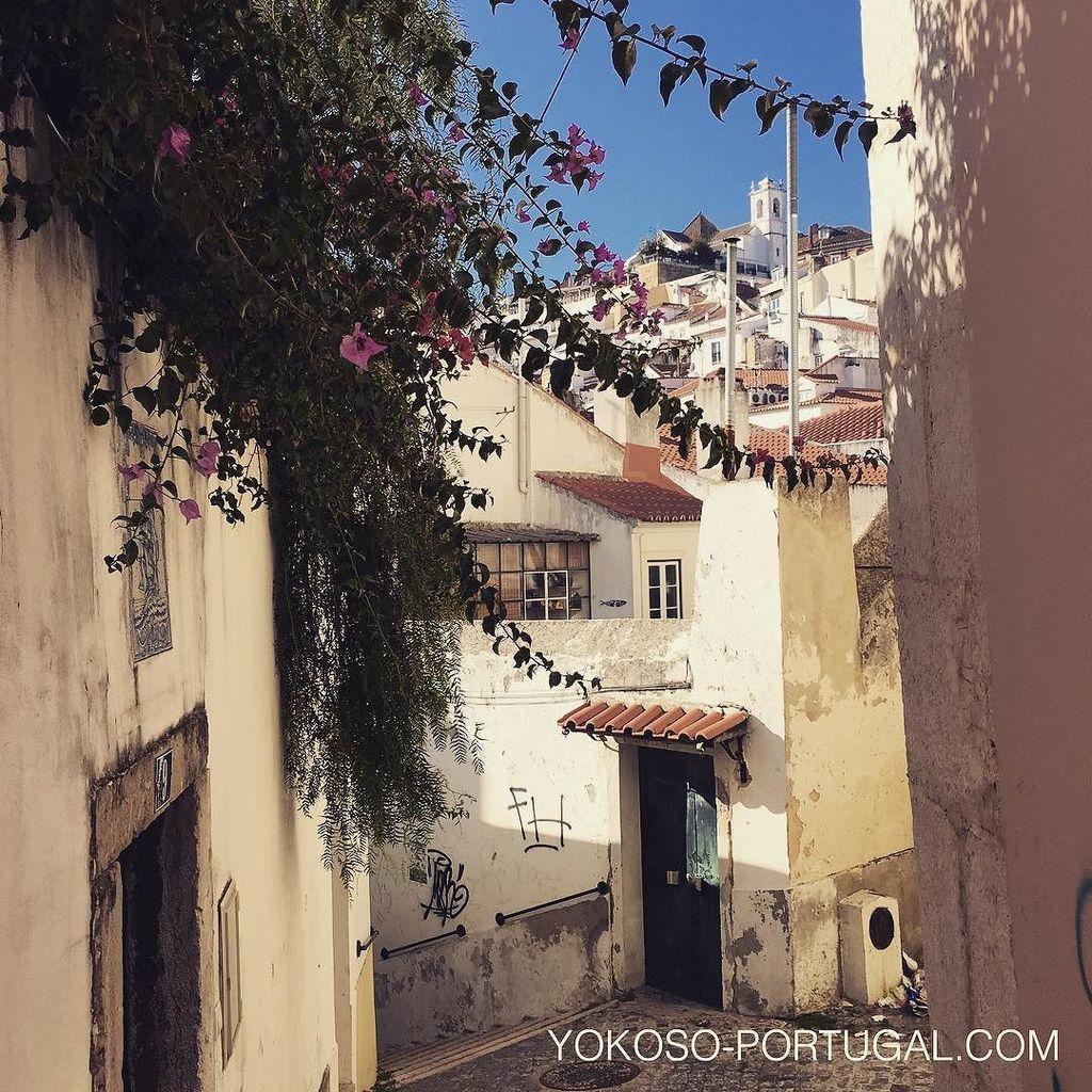 test ツイッターメディア - リスボンのアルファマ地区には、趣のある路地がたくさんあり、あてもなく歩いているだけでも楽しめます。 #リスボン #ポルトガル https://t.co/RqMay5xKcp
