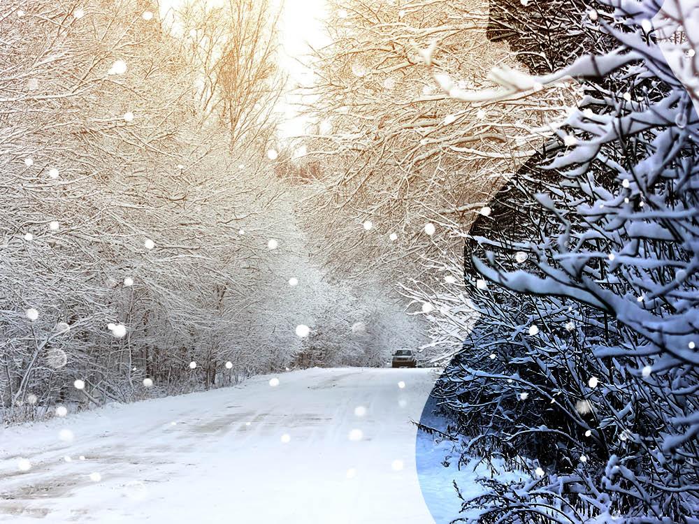 The New Newborn King: An original Christmas story by author Jane Ozkowski