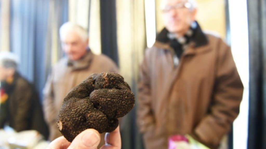 Paris truffle find hailed as boon for urban gardeners