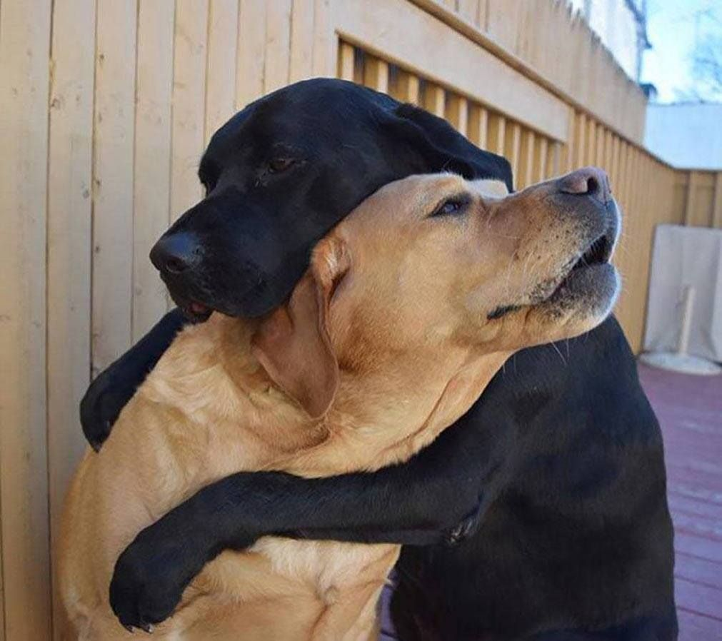 Sometimes all you need is a hug to get you through the day! https://t.co/nxcYm7QdtF