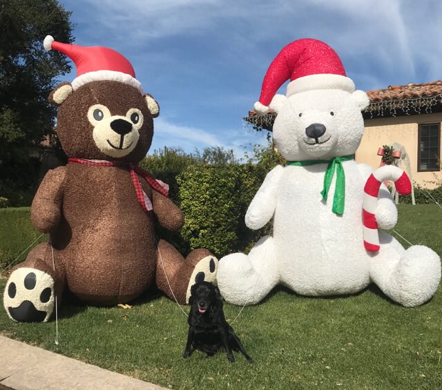 Merry Christmas loves!!!! Gabbana loves you ❤️❤️❤️ https://t.co/UTKlUVYa6C