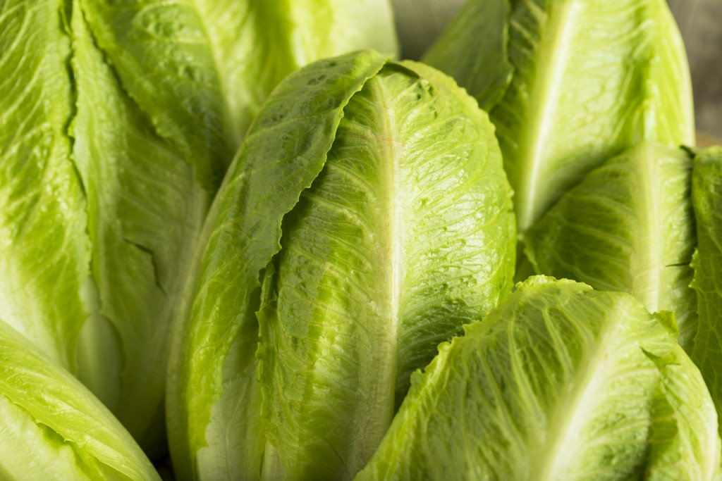 Romaine lettuce may be source of E. coli outbreak