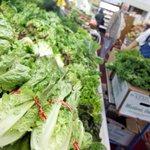 E. coli Cases Linked To RomaineLettuce