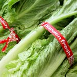 Officials issue warning about eating romaine lettuce amid E. coli outbreak
