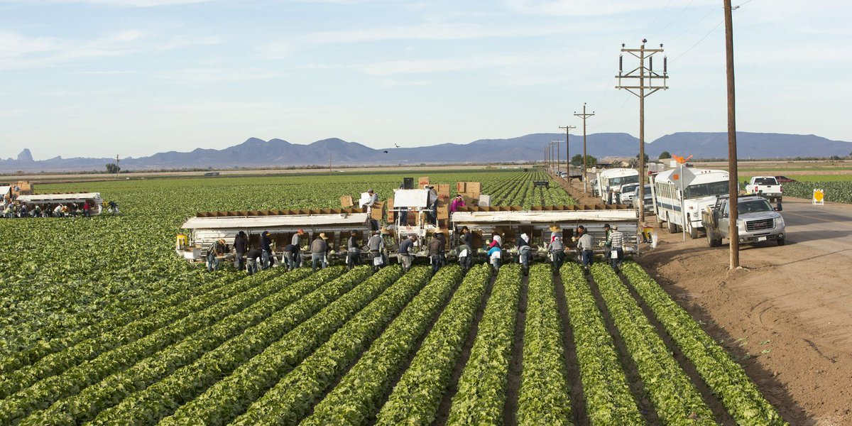 CDC: E. coli outbreak could be linked to romaine lettuce