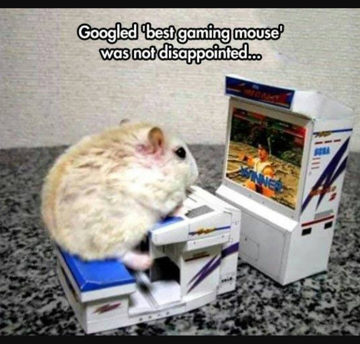 Googled 'best gaming mouse'. Was not disappointed... ���� (and yeah, I know it's a hamster - still not disappointed) https://t.co/jHqaLcKZ4A