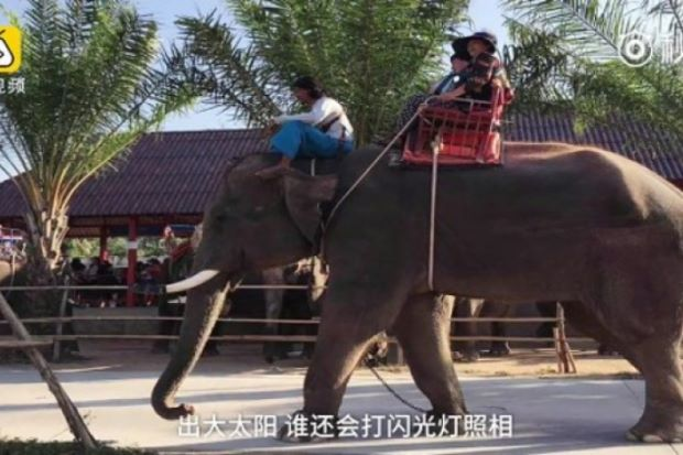 Chinese tourists warned not to ride elephants after guide's death - ASEAN/East Asia