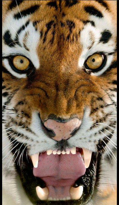 Happy birthday salman khan  Tiger zinda hai                       supar dupar hiat