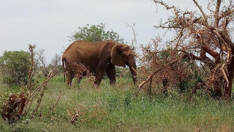 Elephant tramples Laikipia rancher to death