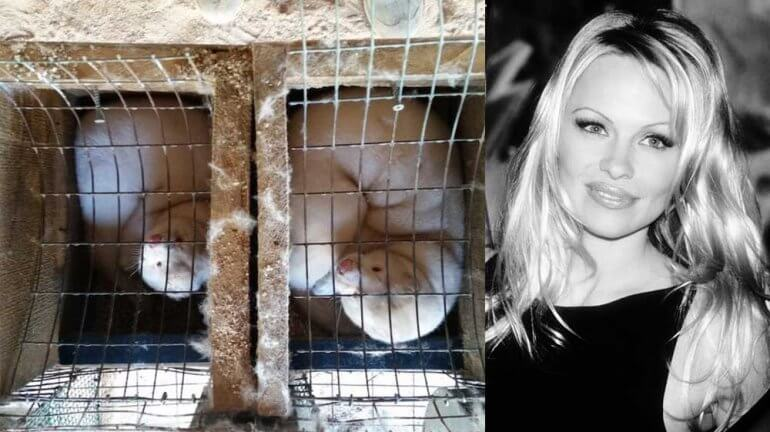 RT @veganfuture: Pamela Anderson Writes to Flemish Minister to Push for Ban on Fur Farming https://t.co/uZQSyFKSNz https://t.co/bivZOko1q1