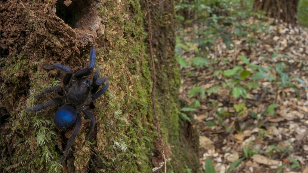 Why Guyana's rainforests are a scientist's dream
