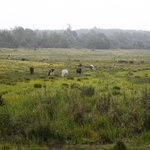 Overgrazing and climate change fuel wetlands depletion
