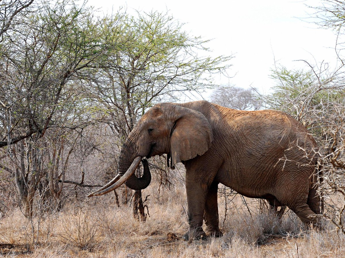 Kenyan ranch owner trampled to death by elephant