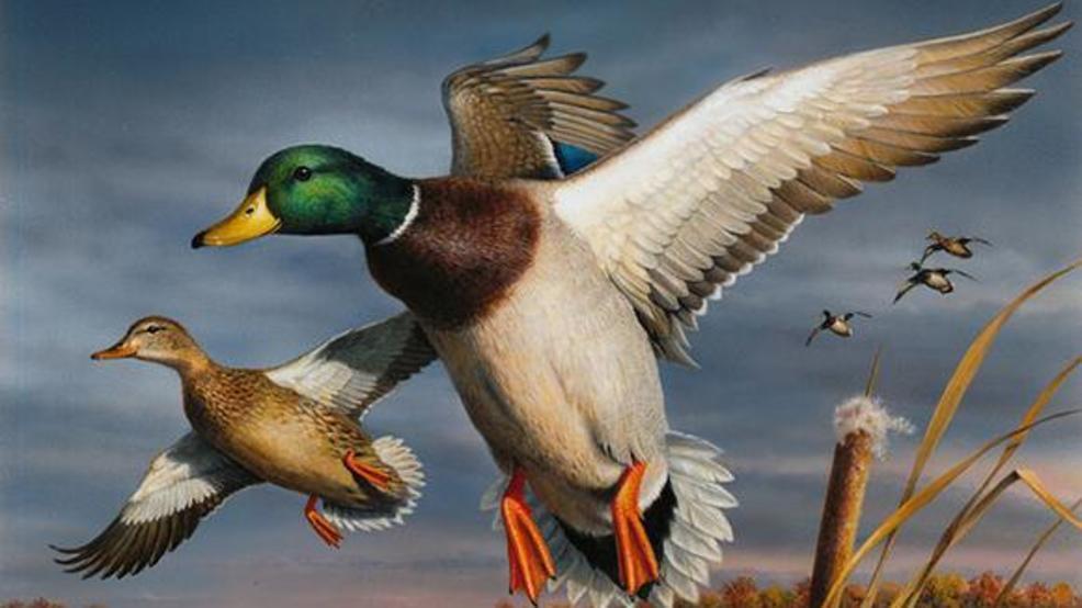 Authorities seize 150 ducks from North Carolina woman