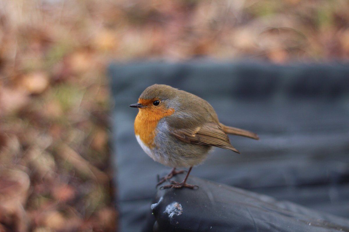 Happy new year! #carp #fishing #carpfishing #robin #wildlife #<b>Outdoors</b> https://t.co/mTET1kpyW