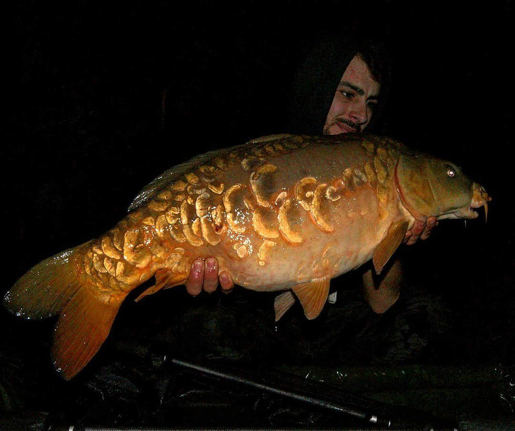 Lewis with a 19.8lb scaly. Top bombing mate #carpfishing #mirrorcarp #essex #<b>Dayticket</b> https: