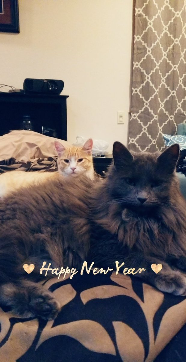 Happy New Year! 🎉🎉 Im hanging out with these pussy cats. What you doing? 0940RUFq3d