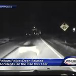 Pelham police: Deer-related accidents on rise