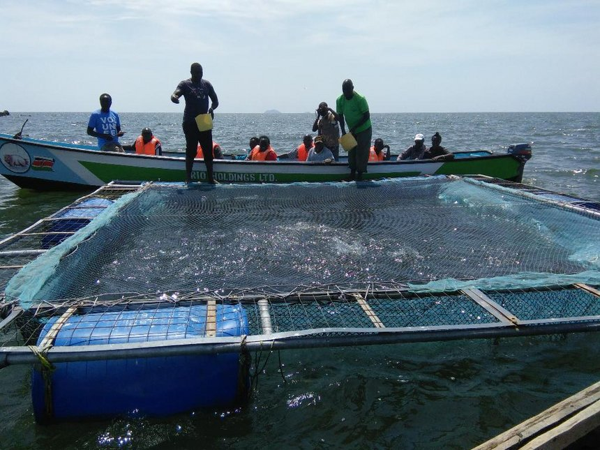 Homa Bay county launches cage fishing to supplement dwindling stock in L Victoria
