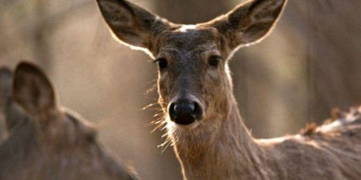 State has opportunities for January deer hunting