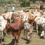 Exorbitant bride price fueling cattle raids in Kerio valley, leaders warn