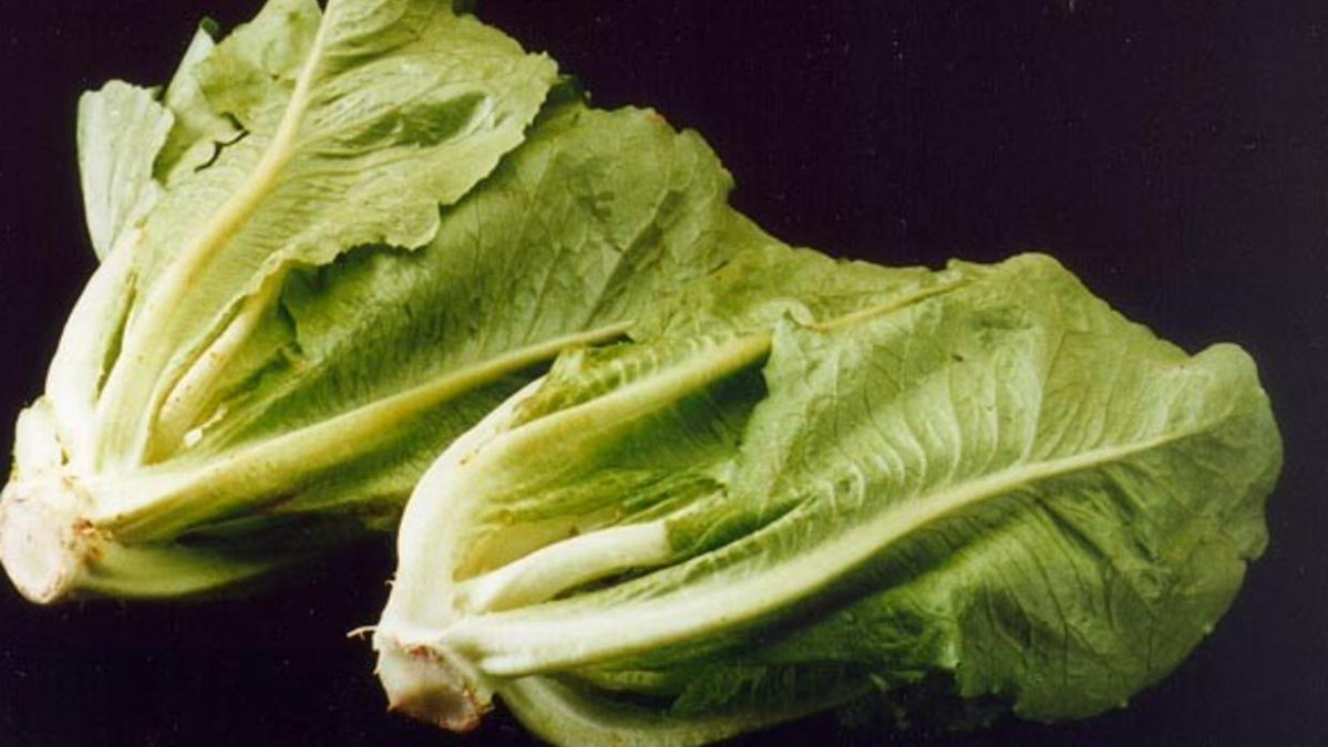 Officials say to avoid romaine lettuce amid E. coli concerns