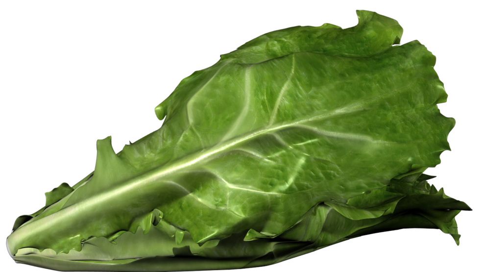 CDC investigating E. coli outbreak related to tainted romaine lettuce in multiple states
