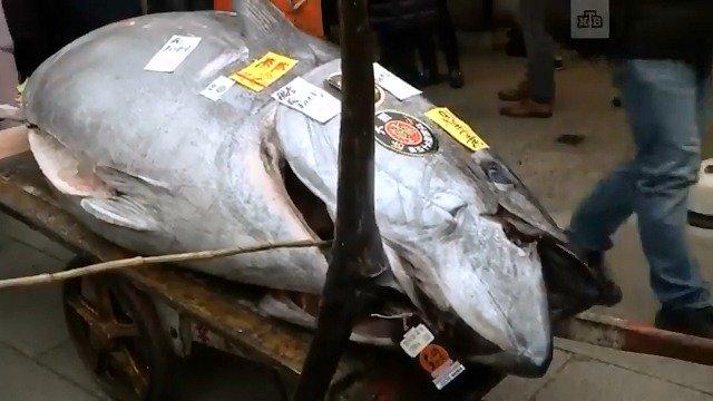 В Японии голубой тунец весом в 405 кг ушел с молотка за $323 тыс.