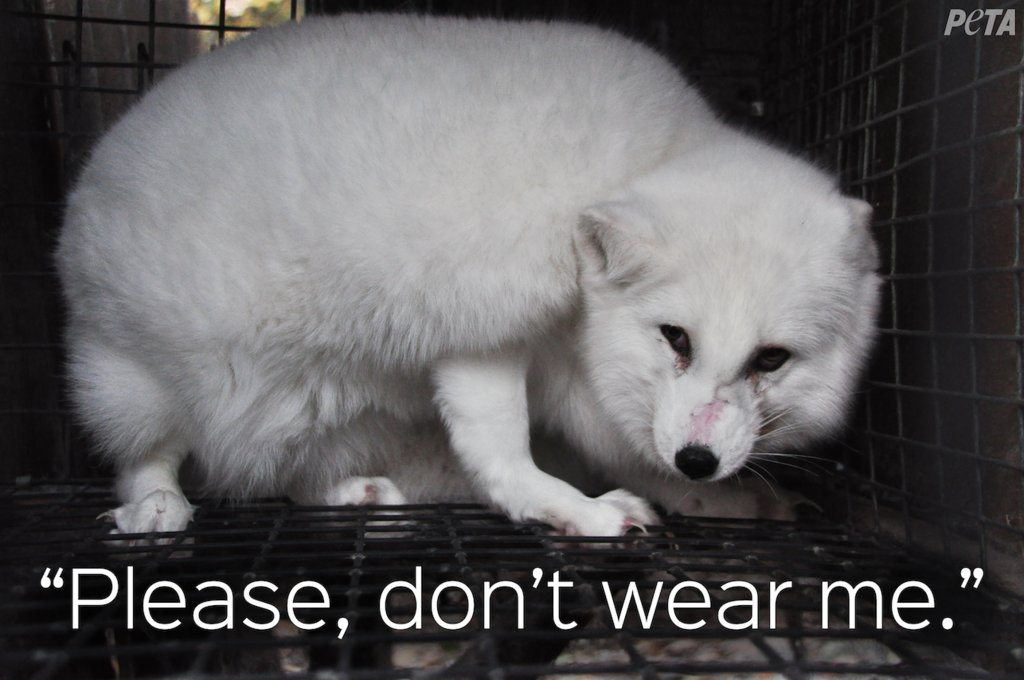 RT @PETAAsia: No one wants to be killed for their fur! #FurIsDead #DropTheFur #FurFreeFriday https://t.co/dNEr0yeovk
