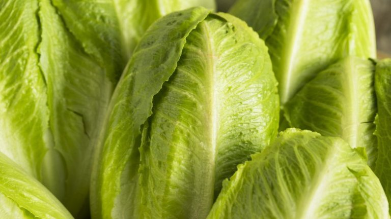 Romaine lettuce is likely source of E. coli outbreak across 13states