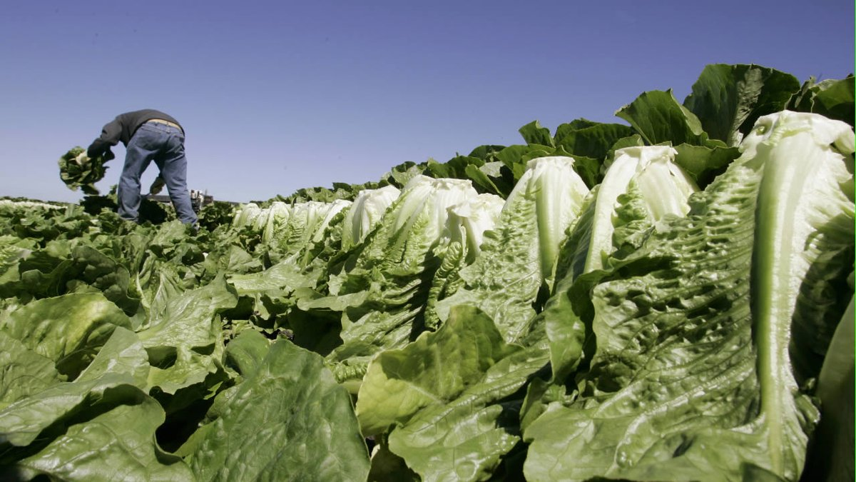2 dead after E. coli outbreak possibly linked to romaine lettuce