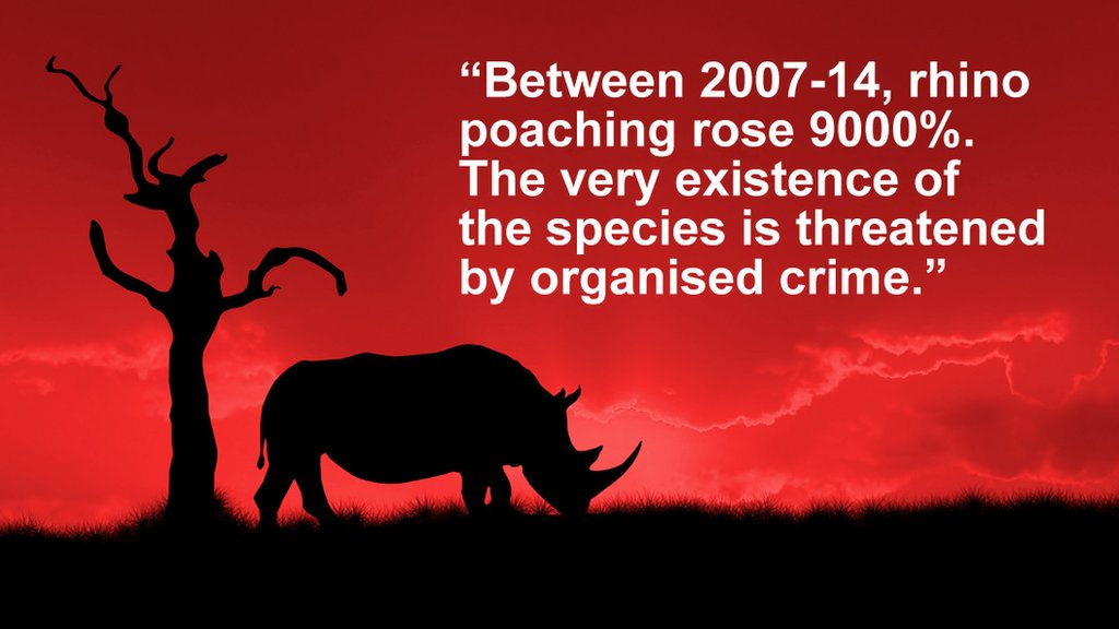 Who are the strange characters behind the massive growth in rhino poaching?  https://t.co/tTRMyv18wA https://t.co/qKtbDpnwCv