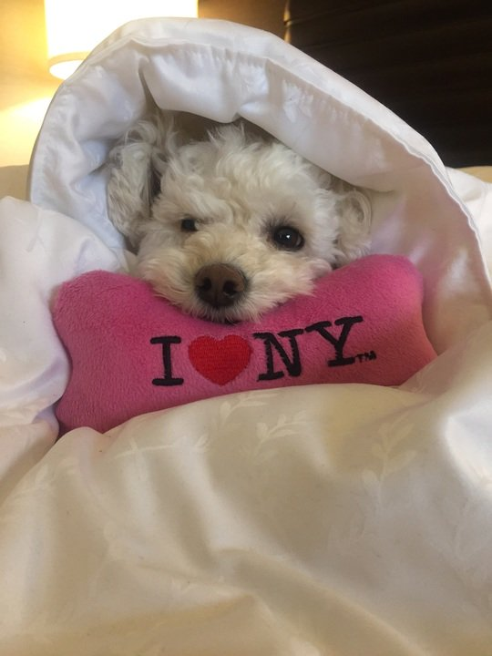 I ❤ this dog. https://t.co/tjmSWrHvE9