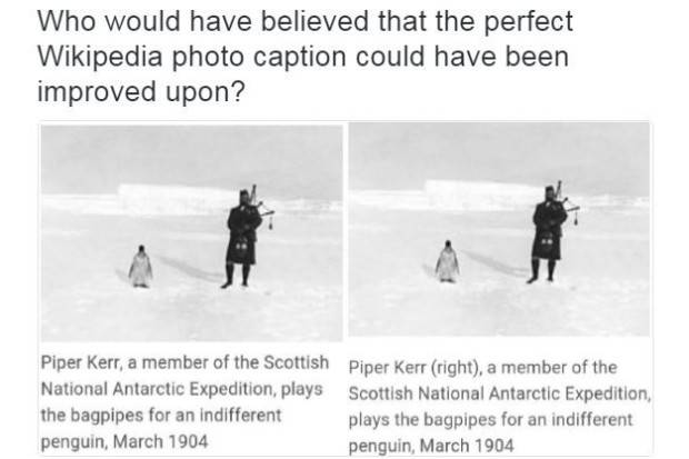 test Twitter Media - RT @burntcopper: It's #penguinawarenessday. Support your local indifferent penguin. https://t.co/YRtgtshPud