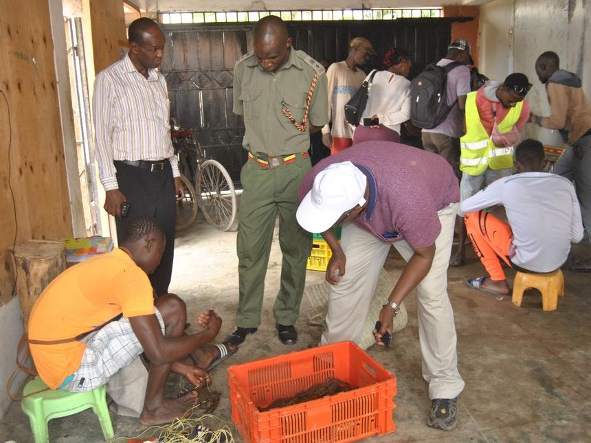 Cops, health officials raid Chinese fish factory in Malindi over noise pollution
