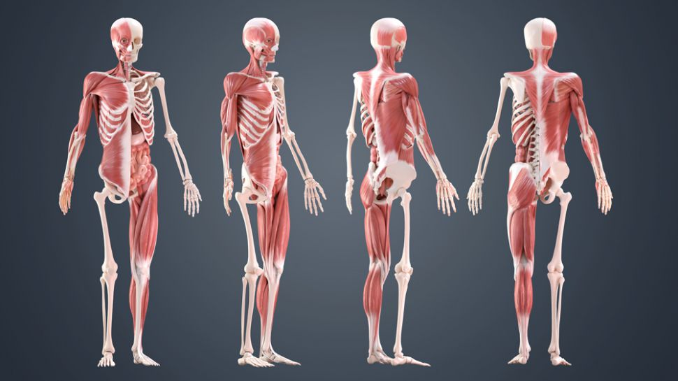 test Twitter Media - Anatomical modelling just got a lot easier. https://t.co/tsC4I4HxRa https://t.co/pliNu3wNid