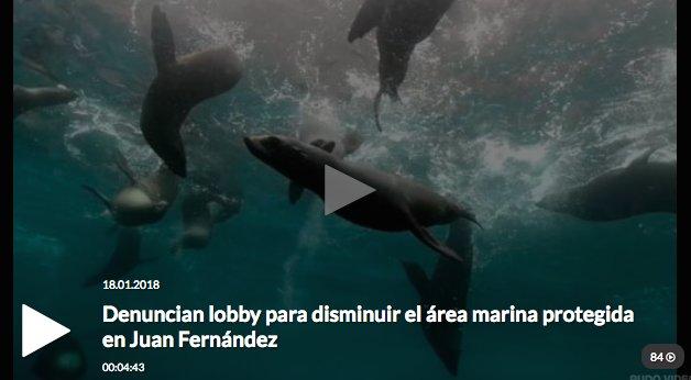 Denuncian lobby de pesqueras para disminuir el área marina protegida en Juan Fernández  https://t.co/SzG7xRcqdg https://t.co/0suvHdIfoc