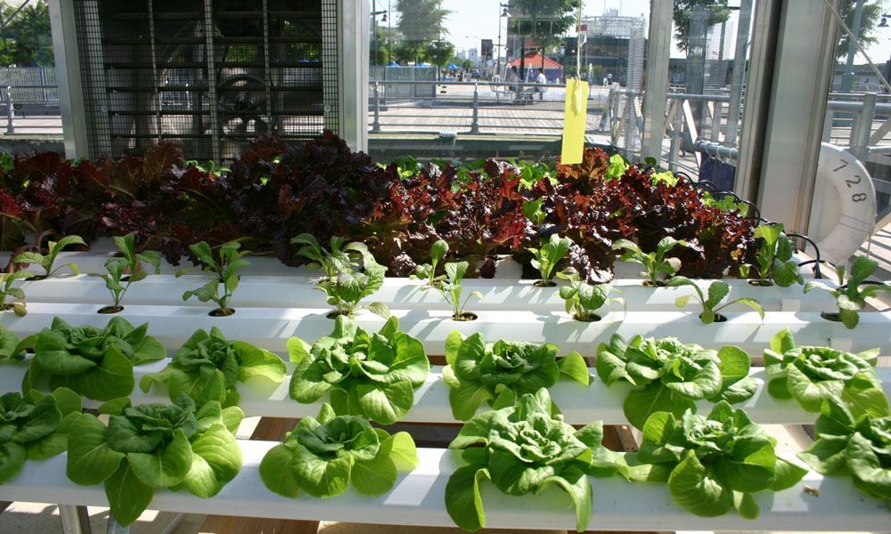 test Twitter Media - Plants grown hydroponically are of exceedingly high quality, occupy less space, and consume fewer resources than traditional growing methods. Keep reading.. https://t.co/9P4qUw3s69 #hydroponics #verticalgardening #urbangardening https://t.co/JOGxeZhW0S