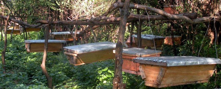 NGO introduces bee keeping in Narok County schools