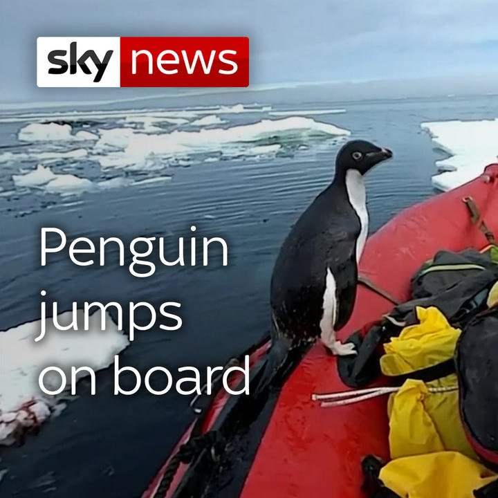 RT SkyNews A penguin in the Antarctic gave researc