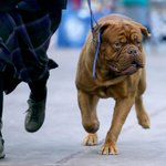 Gone to the dogs: Wildwood hosts dog show (PHOTOS)