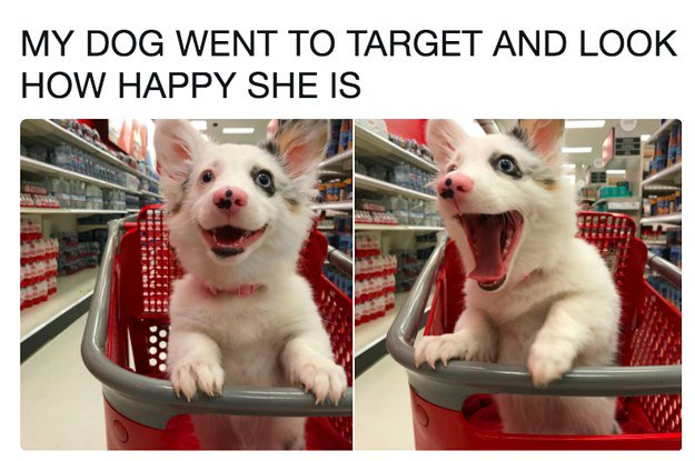 Literally just 21 tweets about very good dogs https://t.co/pkM5oSjJlz https://t.co/ollRFa9yMT