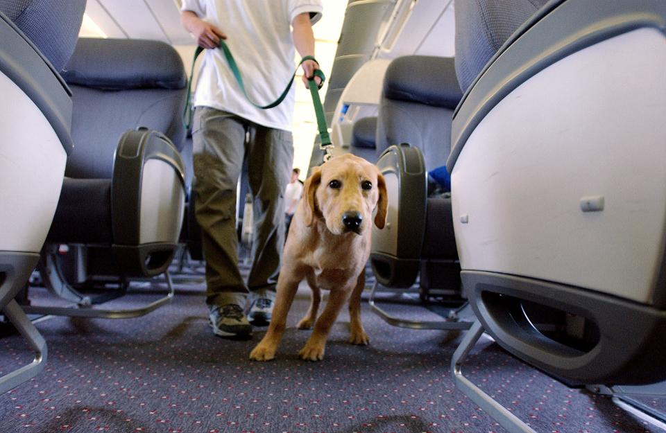 test Twitter Media - Delta will tighten rules for emotional support animal travel, after people abused the rule to carry untrained and non-service animas https://t.co/zbW5iUEMJF https://t.co/h2Cs2HmWnX