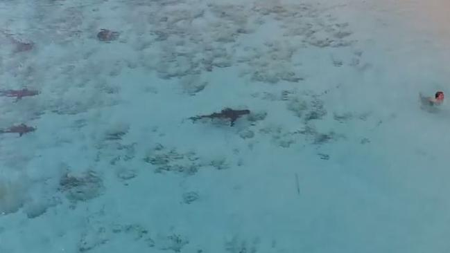 Young boy narrowly escapes four sharks while swimming at a shallow beach in the Bahamas