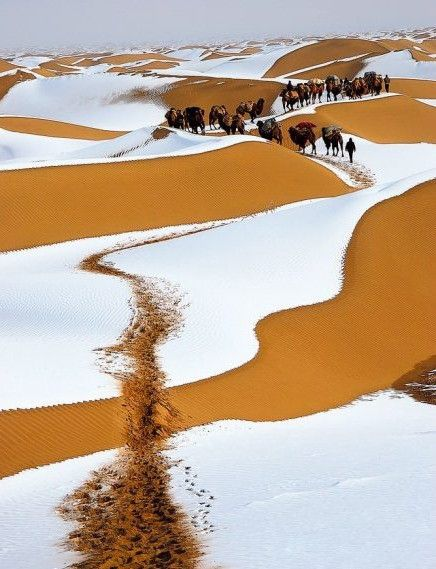 RT @Zeddie101: It snowed for the first time in 40 years in the Sahara. So beautiful, snow and sand. https://t.co/2t3Ja3b3qI