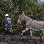 Fake donkey meat sold in China, mainly Beijing: China authorities